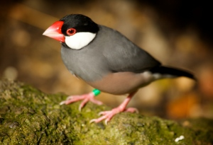 Trail Camera Tips And Tricks, small bird
