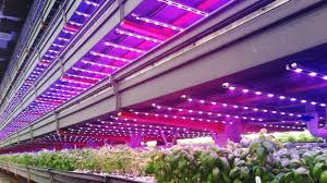 Grow Light Coverage