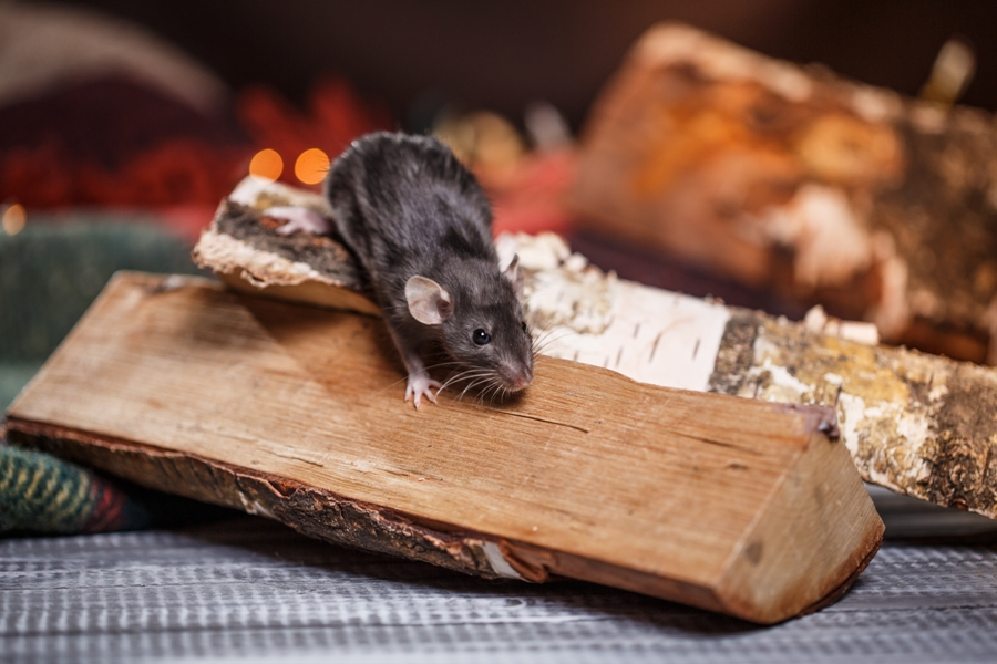 How To Keep Yourself Protected from Winter Pests