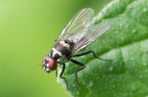 Fascinating Innovations In Pest Control Technology