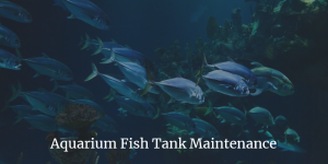 Aquarium Fish Tank Maintenance